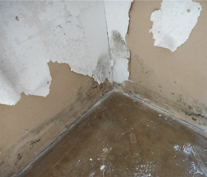 How does mold remediation work? Before